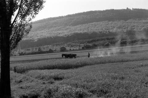 ARH NL Dierssen 0103/0019, Pflügen am Ebersberg, 1946
