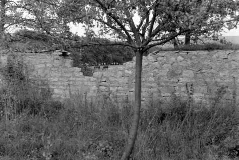 ARH NL Dierssen 0105/0006, Kaputte Mauer im Saupark, zwischen 1946/1947