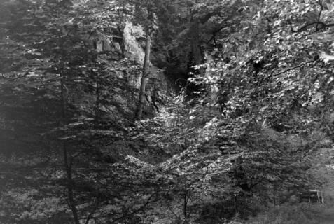ARH NL Dierssen 0105/0008, Felshöhlen im Saupark, zwischen 1946/1947