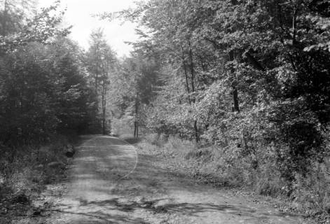 ARH NL Dierssen 0105/0013, Auf dem Weg nach Köllnischfeld, zwischen 1946/1947