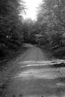 ARH NL Dierssen 0105/0015, Auf dem Weg nach Köllnischfeld, zwischen 1946/1947