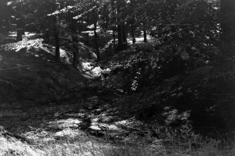 ARH NL Dierssen 0106/0003, Saupark, zwischen 1946/1947