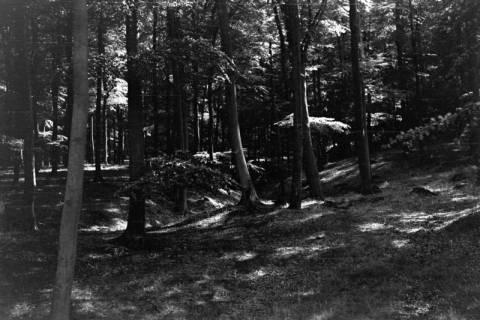 ARH NL Dierssen 0106/0004, Saupark, zwischen 1946/1947