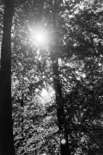 ARH NL Dierssen 0106/0005, Saupark, zwischen 1946/1947