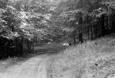 ARH NL Dierssen 0106/0015, Weg im Saupark, zwischen 1946/1947