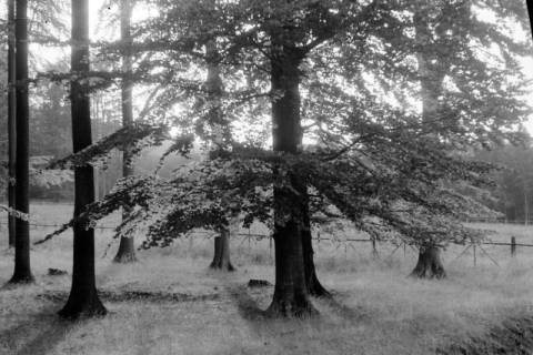 ARH NL Dierssen 0106/0026, Partie im Saupark, zwischen 1946/1947