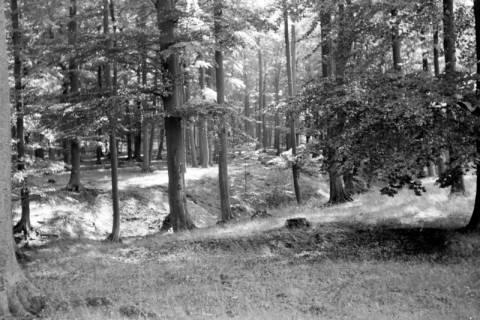 ARH NL Dierssen 0109/0013, Saupark, 1947