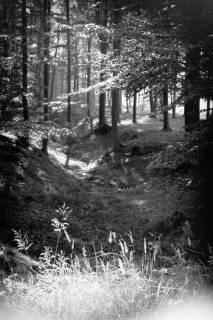 ARH NL Dierssen 0109/0014, Saupark, 1947