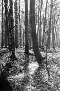 ARH NL Dierssen 0114/0029, Kniggescher Forst, 1948