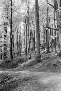 ARH NL Dierssen 0117/0006, Frühling im Deister, 1948
