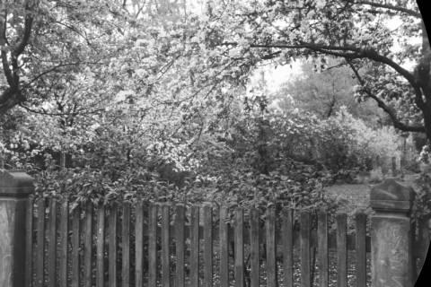ARH NL Dierssen 0117/0010, Garten Ketelhake, 1948