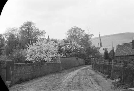ARH NL Dierssen 0117/0011, Baumblüte Landratsamt, 1948
