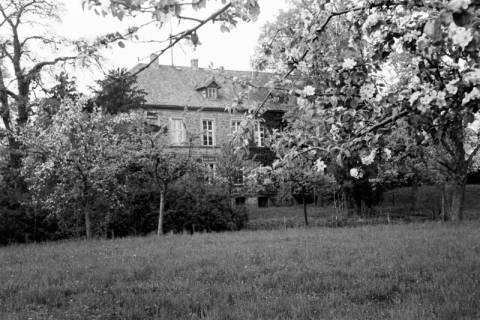 ARH NL Dierssen 0117/0014, Baumblüte Landratsamt, 1948