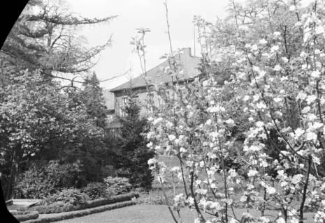 ARH NL Dierssen 0117/0015, Baumblüte Landratsamt, 1948