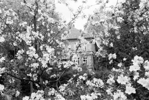 ARH NL Dierssen 0117/0016, Baumblüte Landratsamt, 1948