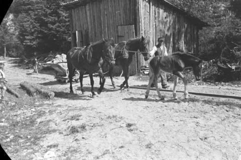 ARH NL Dierssen 0121/0001, Kalksandsteinbruch, 1948