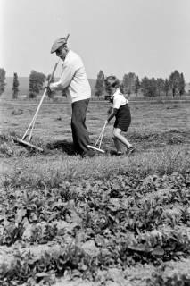 ARH NL Dierssen 0121/0021, Heuwenden bei Beine, 1948