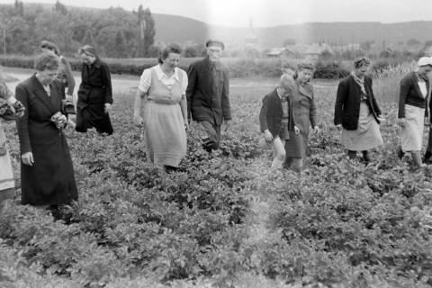 ARH NL Dierssen 0122/0022, Kartoffelkäfer Bekämpfung, 1948