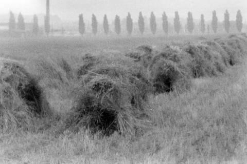 ARH NL Dierssen 0123/0003, Abgeerntetes Feld, 1948