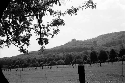 ARH NL Dierssen 0123/0019, Blick zum Hallermundskopf, 1948