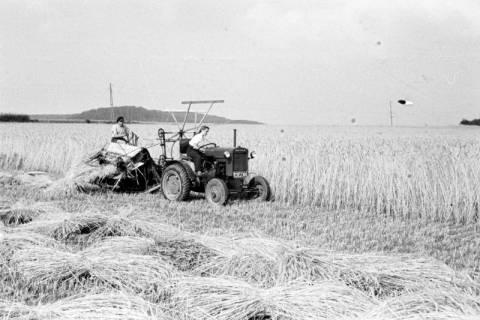 ARH NL Dierssen 0124/0013, Getreidernte, 1948