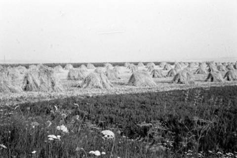 ARH NL Dierssen 0124/0014, Getreidernte, 1948