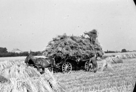 ARH NL Dierssen 0124/0016, Getreidernte, 1948