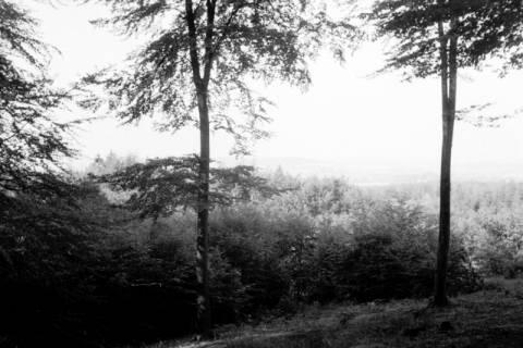 ARH NL Dierssen 0124/0022, Waldlichtung im Deister, ohne Datum