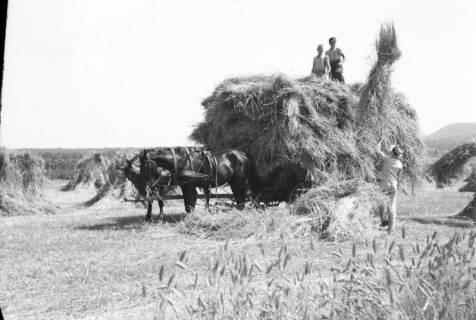 ARH NL Dierssen 0125/0001, Getreideernte, 1948