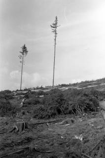 ARH NL Dierssen 0126/0005, Kahlschlag an dem Katzberg, 1948