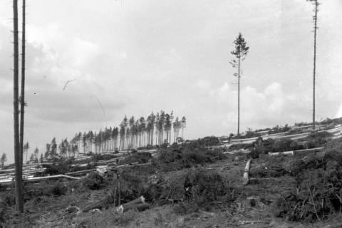 ARH NL Dierssen 0126/0006, Kahlschlag an dem Katzberg, 1948