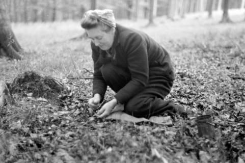 ARH NL Dierssen 0131/0013, Sammeln von Bucheckern, 1948