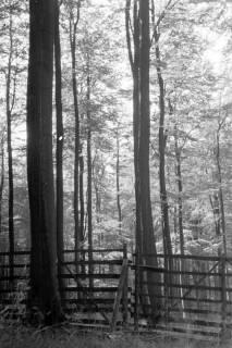 ARH NL Dierssen 0133/0010, Landschaften im Saupark, 1948