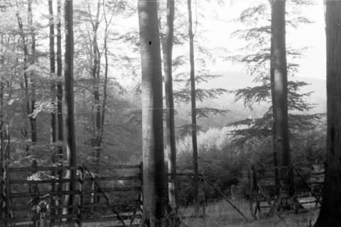 ARH NL Dierssen 0133/0011, Landschaften im Saupark, 1948