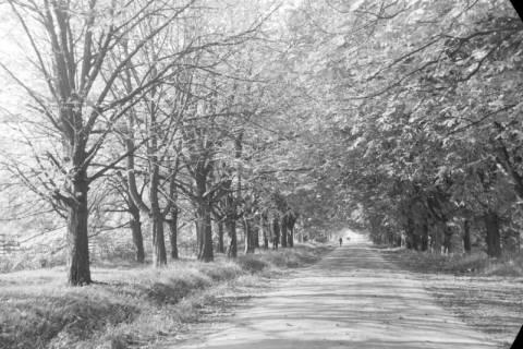 ARH NL Dierssen 0133/0012, Landschaften im Saupark, 1948