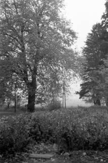 ARH NL Dierssen 0134/0014, Blühender Baum am Jagdschloss, Springe, ohne Datum