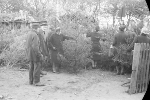 ARH NL Dierssen 0135/0009, Verkauf von Weihnachtsbäumen, Springe, 1948