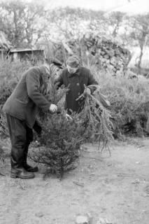 ARH NL Dierssen 0135/0011, Verkauf von Weihnachtsbäumen, Springe, 1948