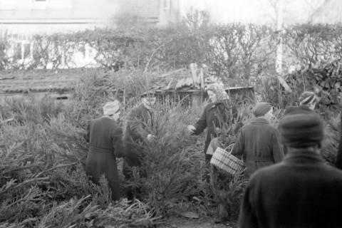 ARH NL Dierssen 0135/0012, Verkauf von Weihnachtsbäumen, Springe, 1948
