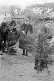 ARH NL Dierssen 0135/0013, Verkauf von Weihnachtsbäumen, Springe, 1948