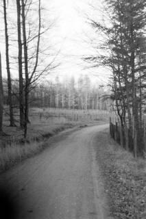 ARH NL Dierssen 0135/0014, Herbst im Saupark, 1948