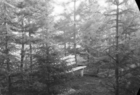 ARH NL Dierssen 0138/0012, In der Jägerallee, Springe, 1949
