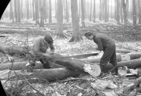 ARH NL Dierssen 0140/0017, Holzfäller im Saupark, 1949