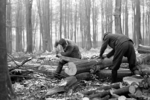ARH NL Dierssen 0140/0018, Holzfäller im Saupark, 1949