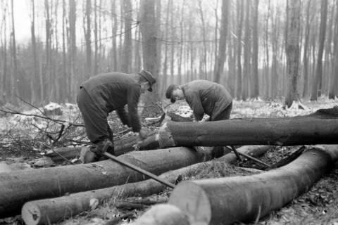 ARH NL Dierssen 0140/0019, Holzfäller im Saupark, 1949