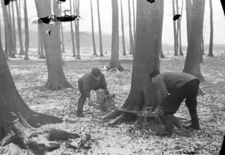 ARH NL Dierssen 0140/0022, Holzfäller im Saupark, 1949