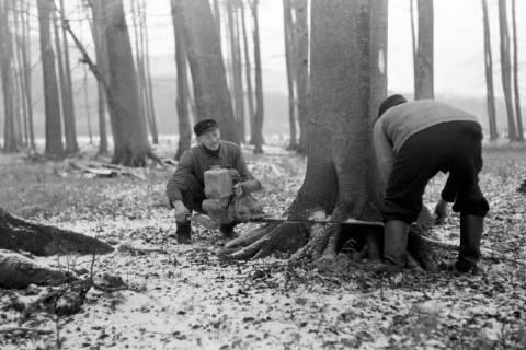 ARH NL Dierssen 0141/0001, Holzfäller im Saupark, 1949
