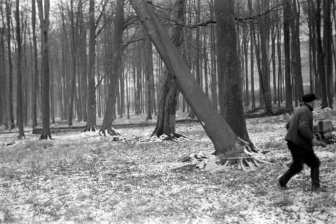 ARH NL Dierssen 0141/0003, Holzfäller im Saupark, 1949