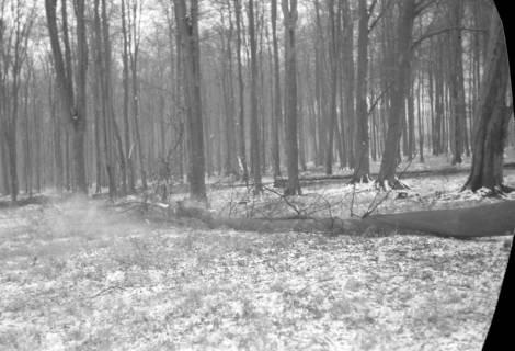ARH NL Dierssen 0141/0004, Holzfäller im Saupark, 1948
