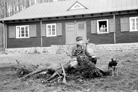 ARH NL Dierssen 0143/0012, Oberförstner Kastner mit erlegtem Hirsch, Springe, um 1949